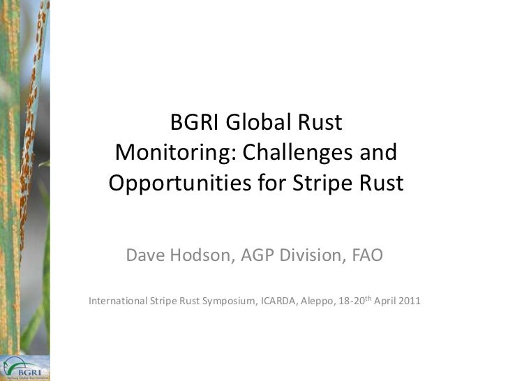 BGRI Global Rust Monitoring: Challenges and Opportunities for Stripe Rust<br />Dave Hodson, AGP Division, FAO<br />Interna...