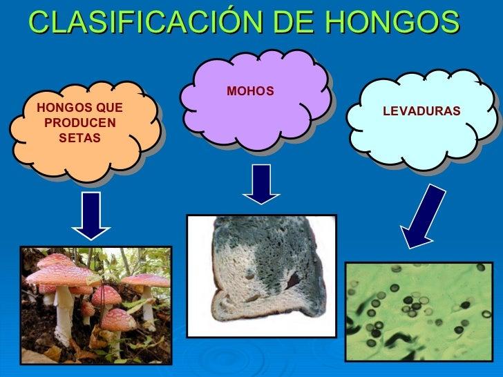 Resultado de imagen de hongos levaduras y mohos
