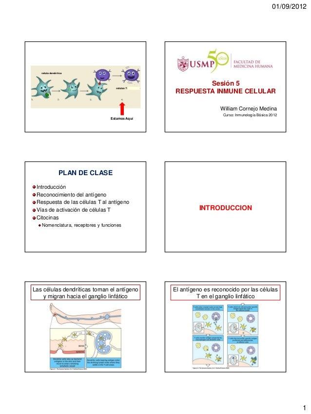 5. respuesta inmune celular