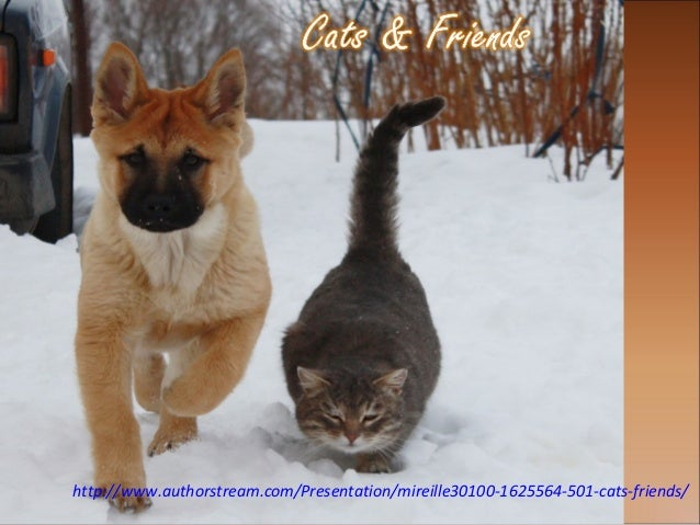 http://www.authorstream.com/Presentation/mireille30100-1625564-501-cats-friends/