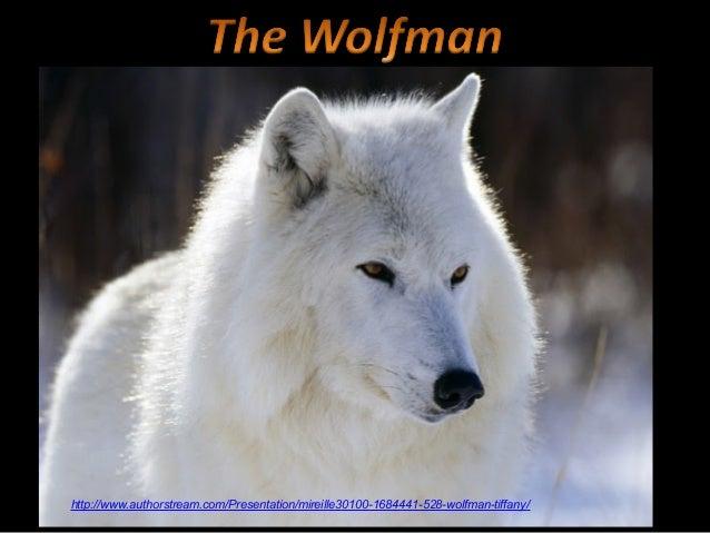 528 the wolfman-tiffany