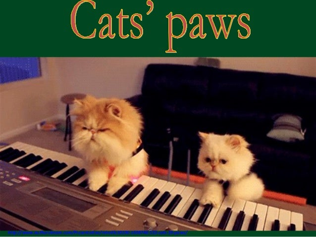 533 - Cats'paws