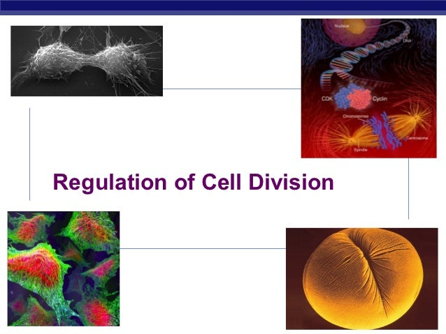 Regulation of Cell DivisionAP Biology                           2008-2009