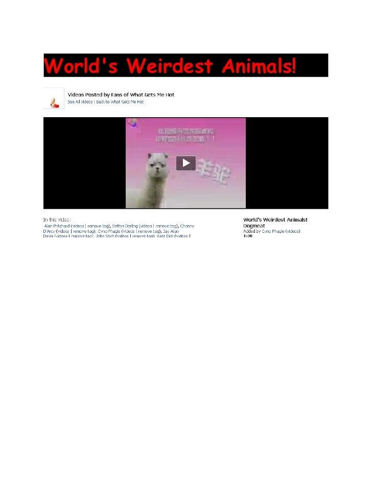 World's Weirdest Animals!