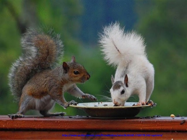 http://www.authorstream.com/Presentation/mireille30100-1720778-542-squirrels/