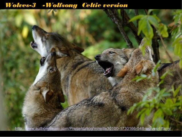 Wolves-3 -Wolfsong Celtic version  http://www.authorstream.com/Presentation/mireille30100-1730166-548-wolves-tiffany/