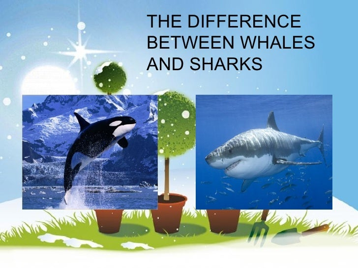 THE DIFFERENCE  BETWEEN WHALES  AND SHARKSPowerpoint Templates                       Page 1