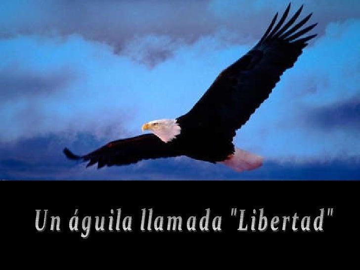 """Un águila llamada """"Libertad"""""""