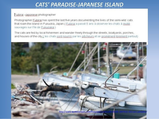 http://www.authorstream.com/Presentation/mireille30100-1847416-591-cats-paradise/