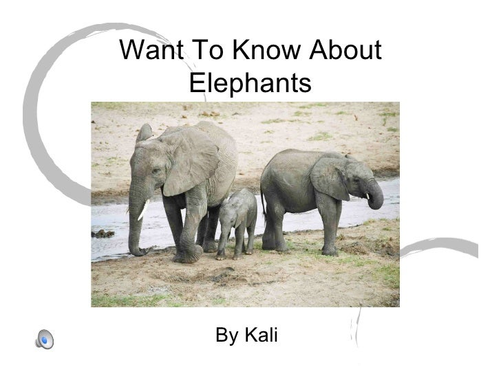 Want To Know About      Elephants           By Kali