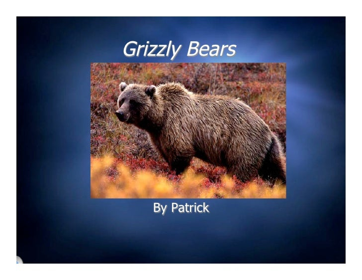 Grizzly Bears        By Patrick