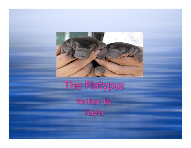 The Platypus   Written By     Kayla