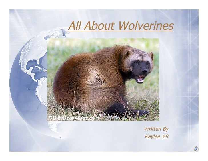 All About Wolverines                   Written By               Kaylee #9