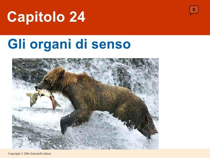 Capitolo 24 Gli organi di senso 0
