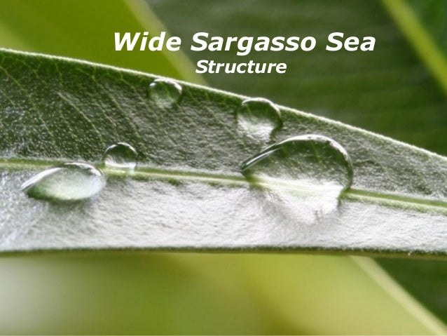 Wide Sargasso Sea       Structure   Powerpoint Templates   Page 1