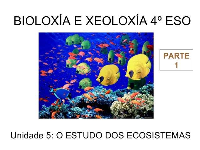 BIOLOXÍA E XEOLOXÍA 4º ESO Unidade 5: O ESTUDO DOS ECOSISTEMAS PARTE 1