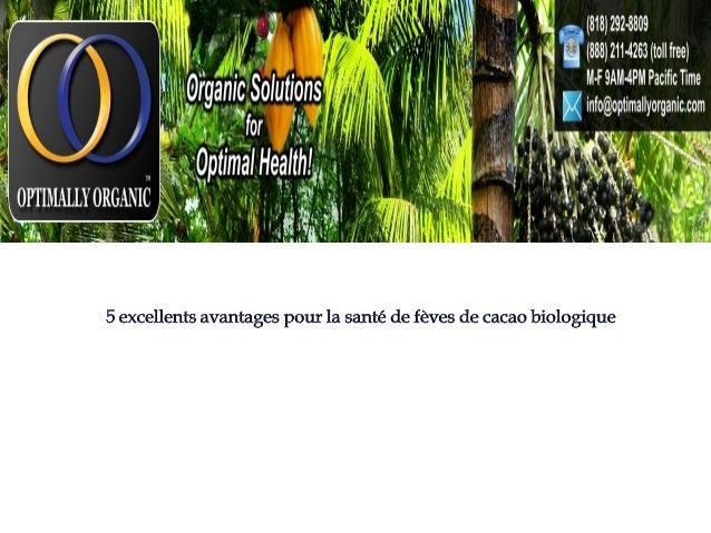Les fèves de cacao ont été utilisés pendant des milliers d'années (depuis l'ancienne culture maya) pour leur nutrition et ...