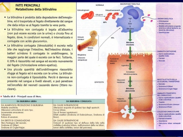 Albergo con trattamento di varicosity