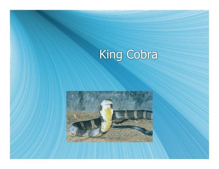 5 G King Cobra
