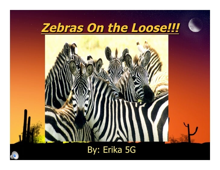 Zebras On the Loose!!!            By: Erika 5G
