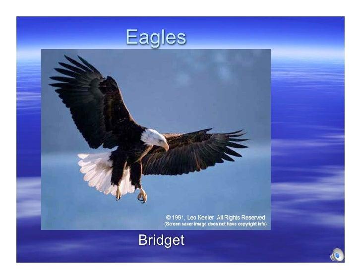 Eagles      Bridget