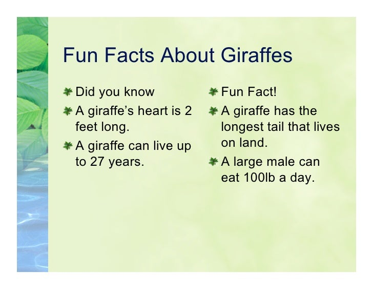 5kl giraffes for Interesting facts about crack