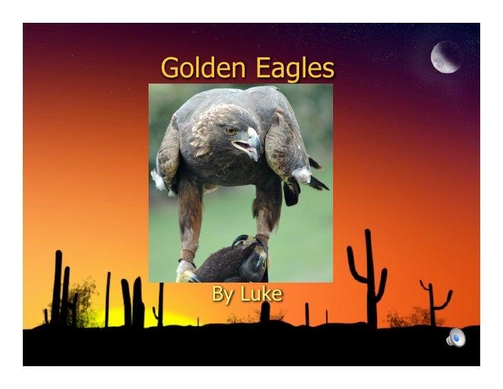 Golden Eagles        By Luke