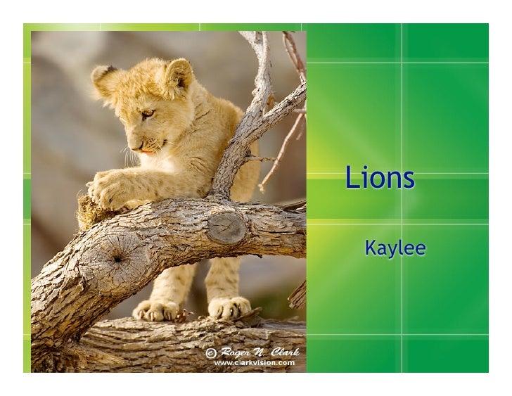 Lions   Kaylee