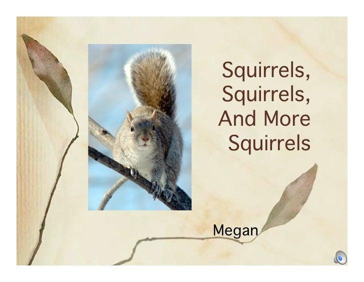 Squirrels, Squirrels, And More  Squirrels    Megan