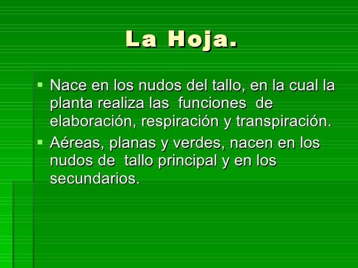 La Hoja. <ul><li>Nace en los nudos del tallo, en la cual la planta realiza las  funciones  de elaboración, respiración y t...