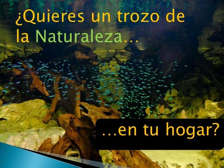 ¿Quieres un trozo de <br />la Naturaleza…<br />…en tu hogar?<br />