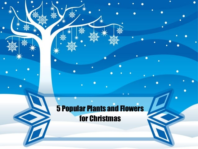 5 Popular Plants and Flowers for Christmas