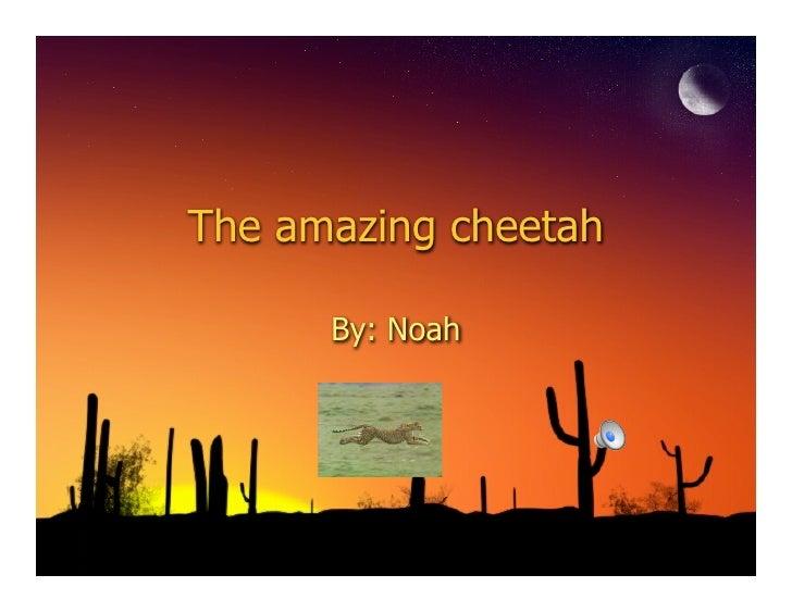 The amazing cheetah        By: Noah
