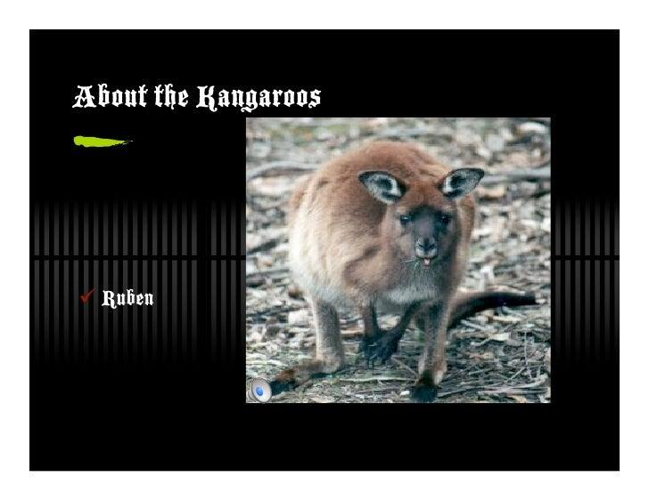 About the Kangaroos      Ruben
