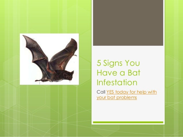 5 Signs You Have a Bat Infestation Call YES today for help with your bat problems