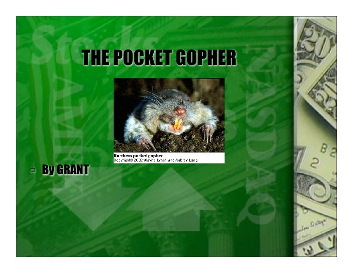 THE POCKET GOPHER      By GRANT
