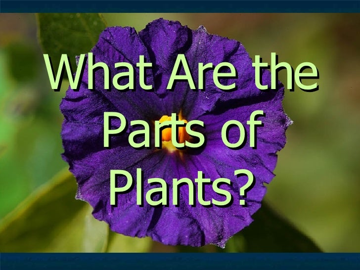 What Are the Parts of Plants?