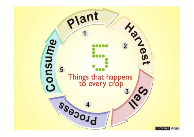5 things that happens to every crop by sotonye anga