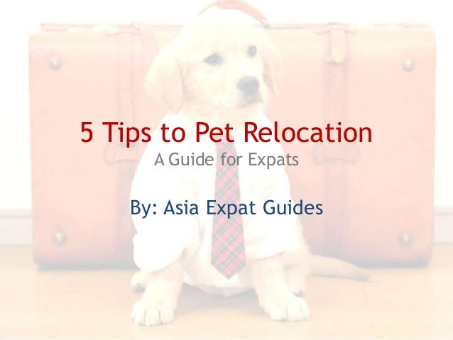 Asia Expat Guides: 5 Tips to Pet Relocation