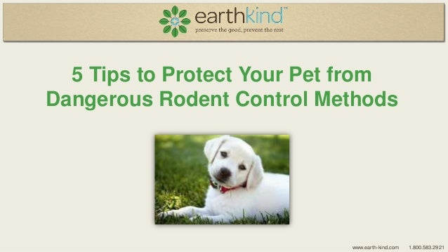 5 Tips to Protect Your Pet from Dangerous Rodent Control Methods  www.earth-kind.com  1.800.583.2921