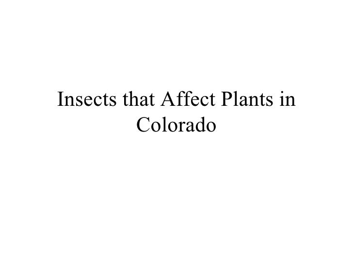 Insects that Affect Plants in Colorado