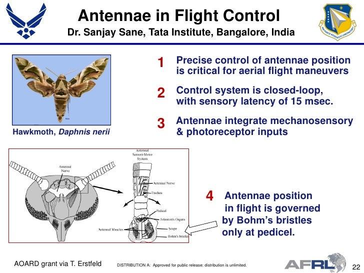 Flight Maneuvers Aerial Flight Maneuvers 2