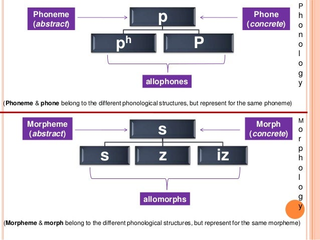 difference between morph allomorph morpheme Definition about allomorph and example jumat, 22 april 2016 difference between free morpheme and bound morpheme bound and free morphemes f ree morphemes.