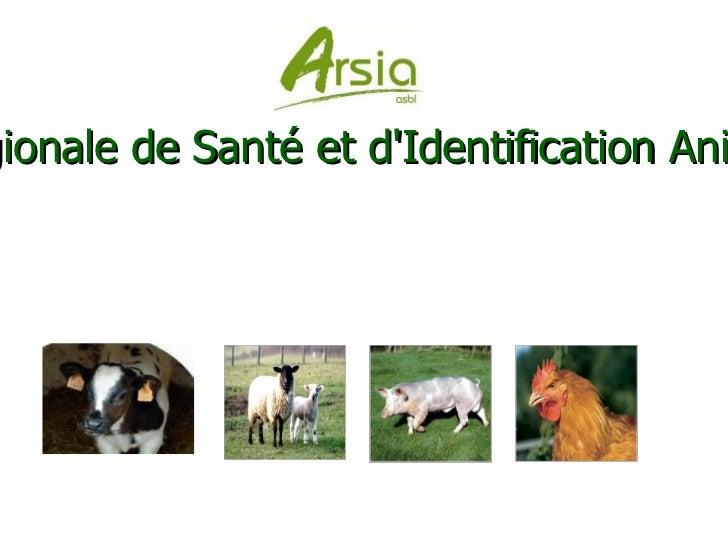 Association Régionale de Santé et d'Identification Animales - a.s.b.l.