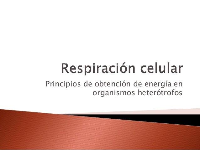 Principios de obtención de energía en             organismos heterótrofos