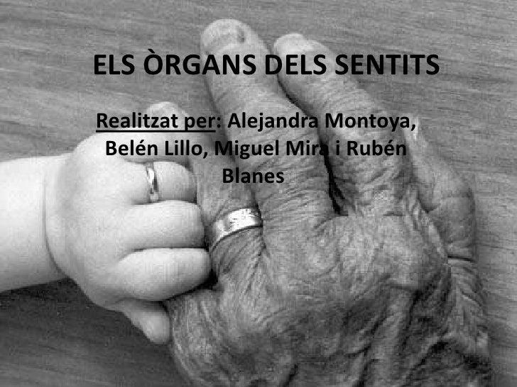 ELS ÒRGANS DELS SENTITSRealitzat per: Alejandra Montoya, Belén Lillo, Miguel Mira i Rubén              Blanes.