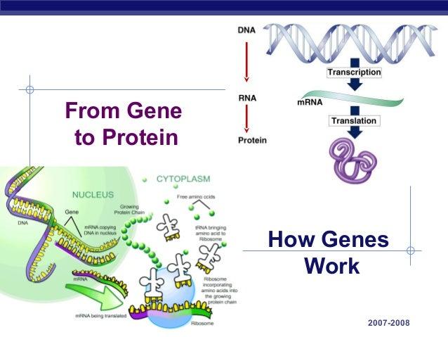 61 genetoprotein2008