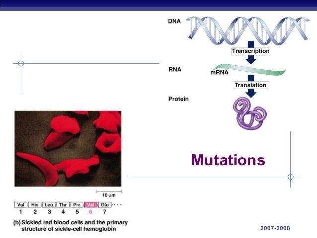 ap bio essay gene regulation