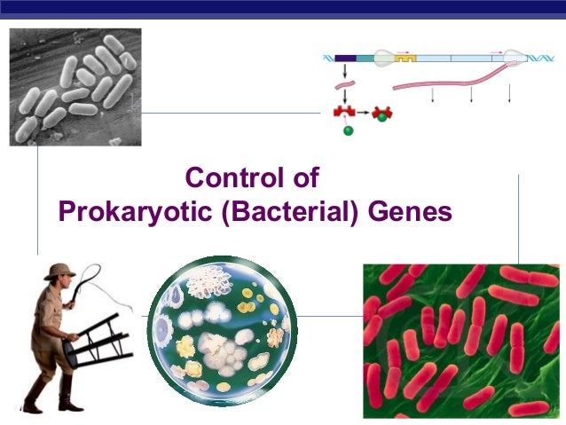 Control of     Prokaryotic (Bacterial) GenesAP Biology                           2007-2008