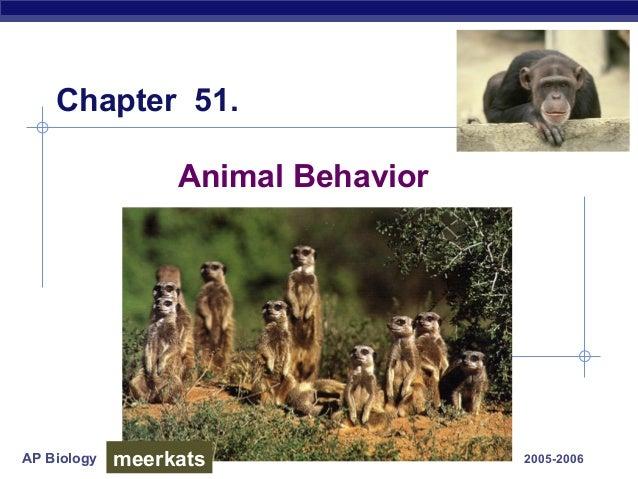 AP Biology 2005-2006 Animal Behavior Chapter 51. meerkats